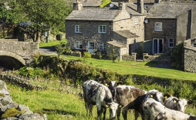 Stone cottages and bridge, grass with cows in the country