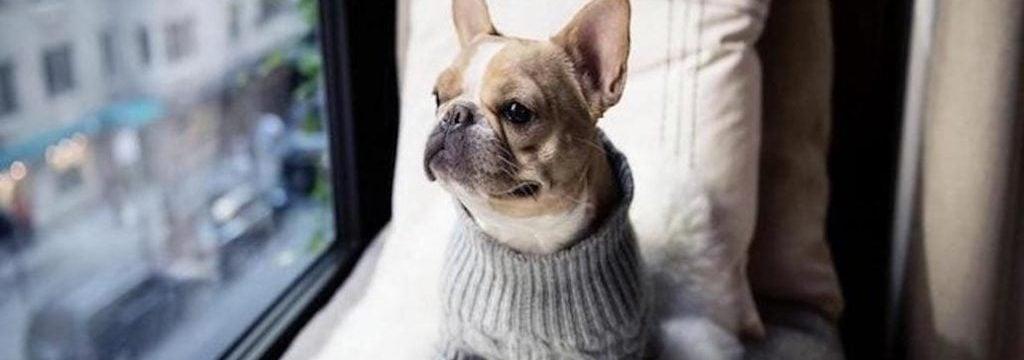 Dog Friendly Bed and Breakfast Breaks | Pet Luxury